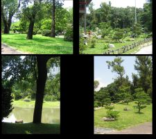 Japanese Gardens-trees pack 01 by CotyStock