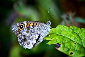 The Butterfly look... by IgorGlavas