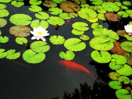 Lillypads and Koi by LSD-Dreams
