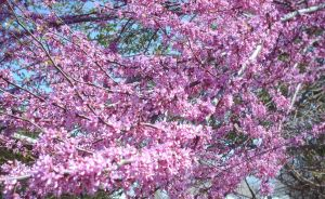 blooming tree by baby-wicca89