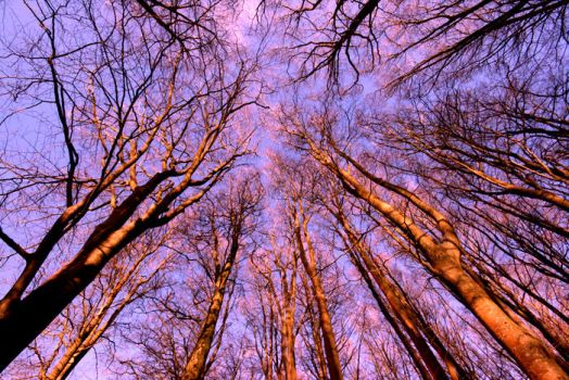 Sunset Trees by Barhomi