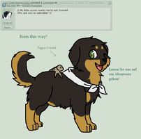 Q + A 7 by Ask2P-Prussdog