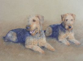 Airedale Terriers by pawtraits