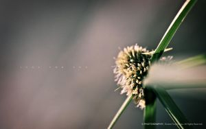Flower II: Just For You 5 by reubenteo