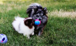 Baby Colbie Tay and Miley Fetch by DreamEyce