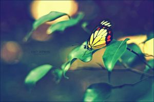 Butterfly by orangeish