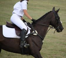 STOCK Showjumping 445 by aussiegal7