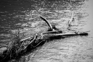 In shallow waters by RobertaBohns