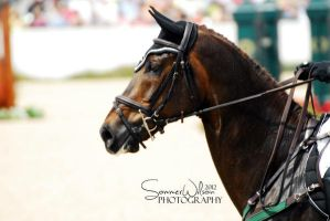 Rolex Kentucky 2012 by zeeplease