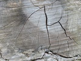 Wood Texture 5 by Ox3ArtStock