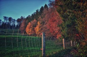 Autumn Colors by daenuprobst
