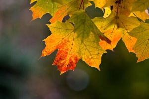 Leaf by BIREL