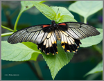 The Beauty of Butterfly Wings by Mogrianne