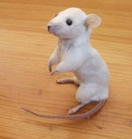 Taxidermy mouse by EternalEmporium