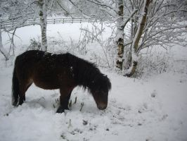 horse winter stock by HumbleBeez