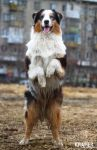 The stallion by Tikeru