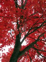 Red Tree 2 by Lilith-Symphony