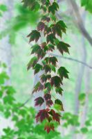 Leaves 3 Picture Vertical Pano by Joe-Lynn-Design