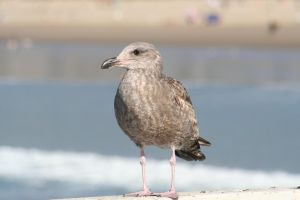 Some seagull by sirmanguyperson