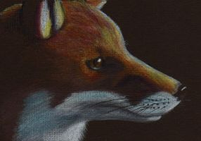 Fox Portrait - Colored Pencil by WolfScribe