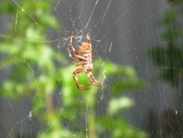 Spider in web series two 03 by teletran