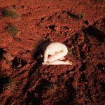 Red Dust Cocoon by pauline-greefhorst