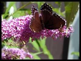 More Butterfly by St0DaD