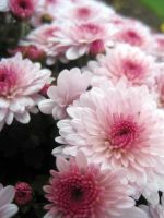 Mums the word by urban-photos