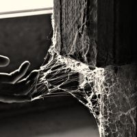 Caught in the Web by ScelusSceleris