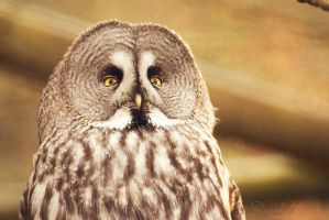 Great grey owl by Ravenith