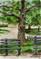 Battery Park Bench by grobles63