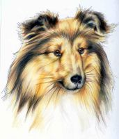 shetland sheepdog headshot by EatToast
