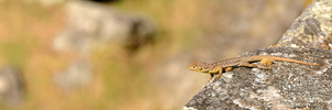 Lizard in the Sun by Bathlamos