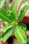 Backyard Plant After The Rain by LDFranklin