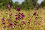 Colours of the summer II by Gambassi
