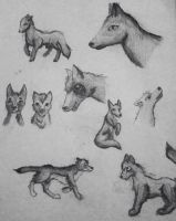 Wolf practice by Silosson