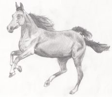 Horse Pencil Drawing by Sephtis
