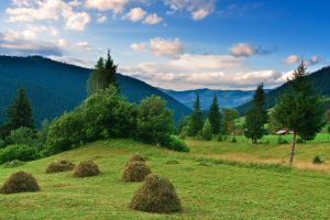 Summer in Bukovina by lica20