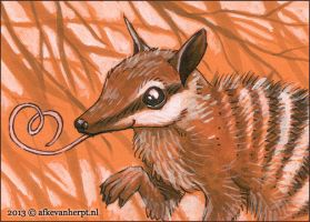 Numbat Love by afke11