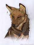 O RLY by Canis-ferox