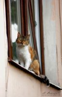 Window viewing by panna-cotta