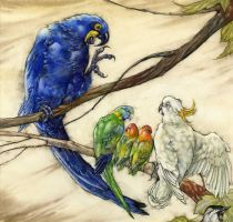 Parrots from The Vain Jackdaw by Himmapaan