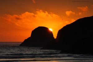 Cannon Beach - Sunset Flock by pyro303