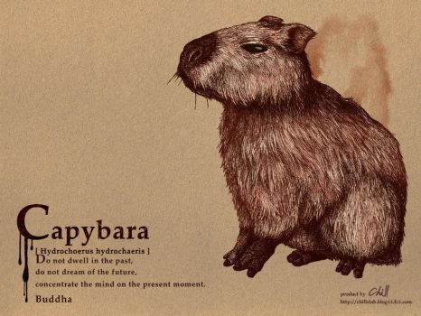 Capybara by chills-lab
