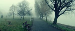 .:A Foggy Morning In The Park:. by bogdanici