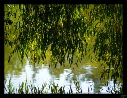 Tears of the Willow by J-Y-M
