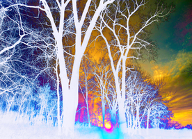 psychedelia forest by Ayula