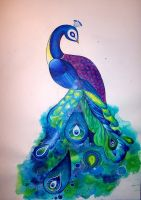 peacock by shannongordy