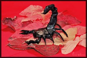 Origami Scorpion by FoldedWilderness