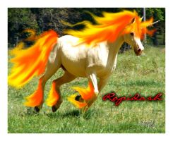 Rapidash Real by Dannys-angel